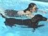 hp-jo-loulou-schwimmen