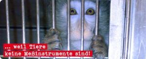 Buerger gegen Tierversuche gefaehrlich