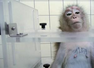 Bild-Anzeige-Kreiter-Tierversuchsgegner Bundes